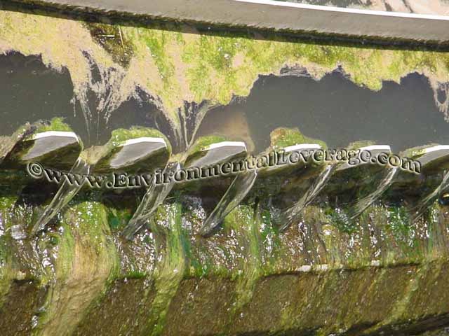 algae clogging weirs