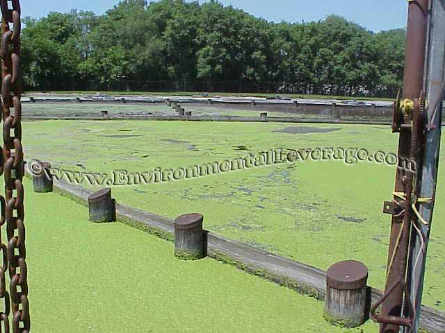 duckweed on lagoon