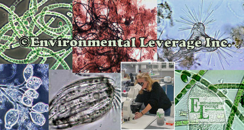 Environmental Leverage Lab Analysis