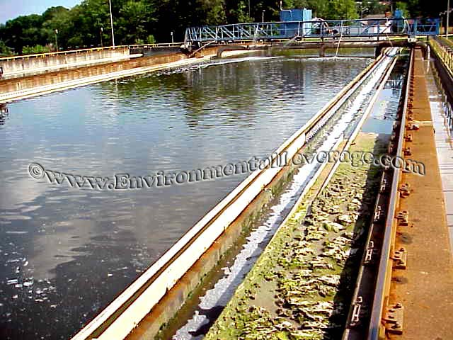 algae in clarifier